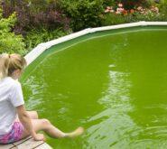 basen z zieloną wodą